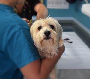 Veterinary-Insurance-Philadelphia